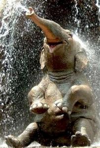 Elephant-Joy